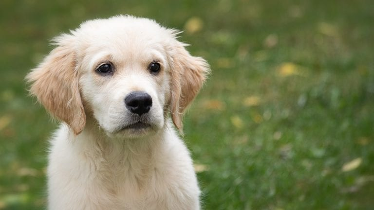 The Best Dog Breeds For Families 2020