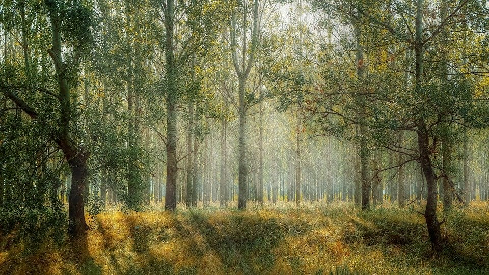 What are the advantages of Forest Conservation