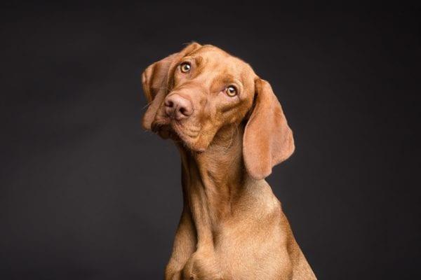 Best Dog Care Blogs