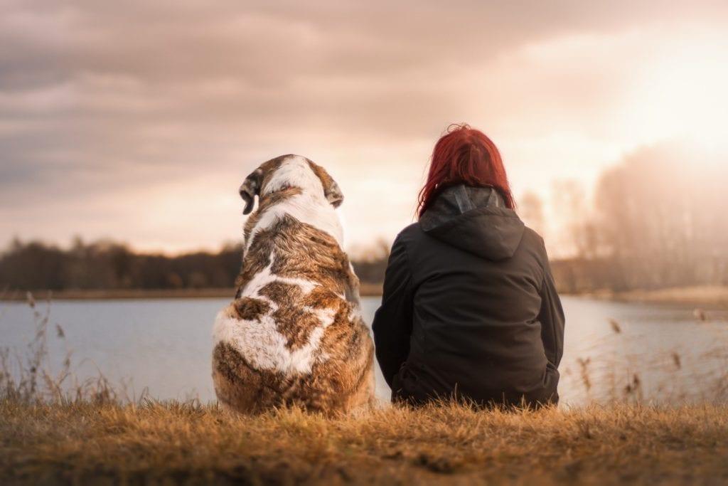 Dog care blogs