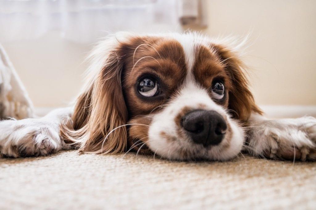 Top Dog Care Blogs