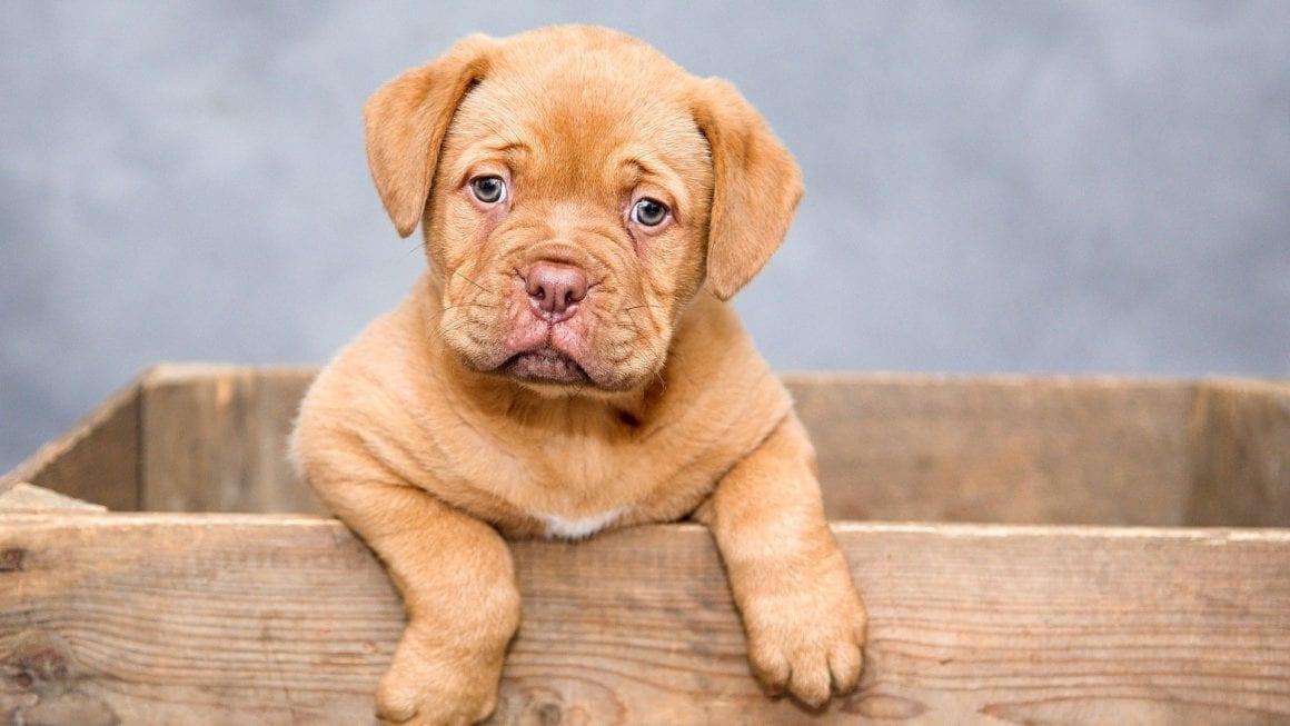 Best Pet Blogs