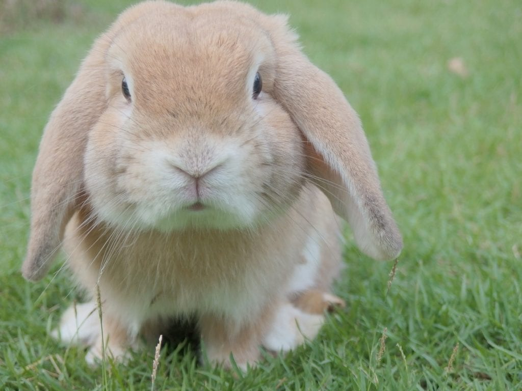 Best Pet Care Blogs