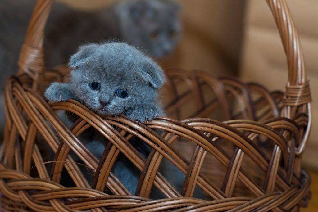 Most Popular Pet Care Blogs