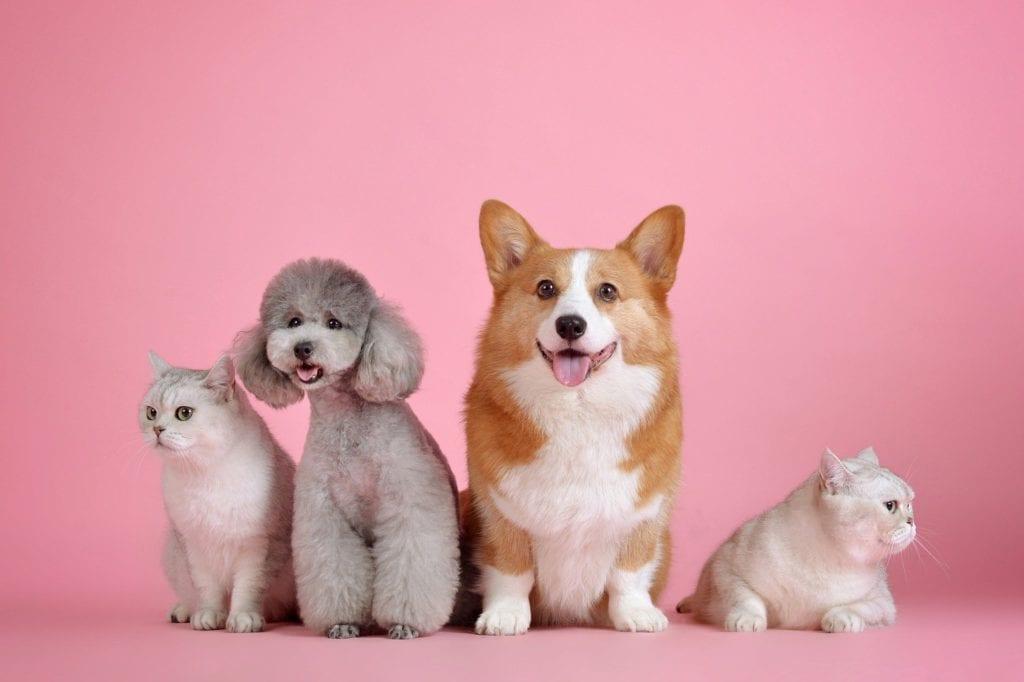 Pet Care Blogs