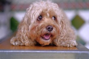 Top 10 most friendly dog breeds in the world