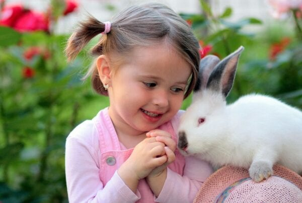 Top 10 Most Friendly Animals in the World