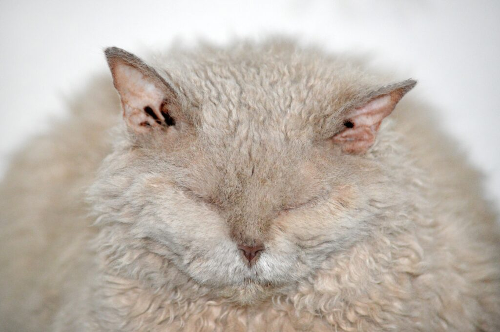 Shedding of fur