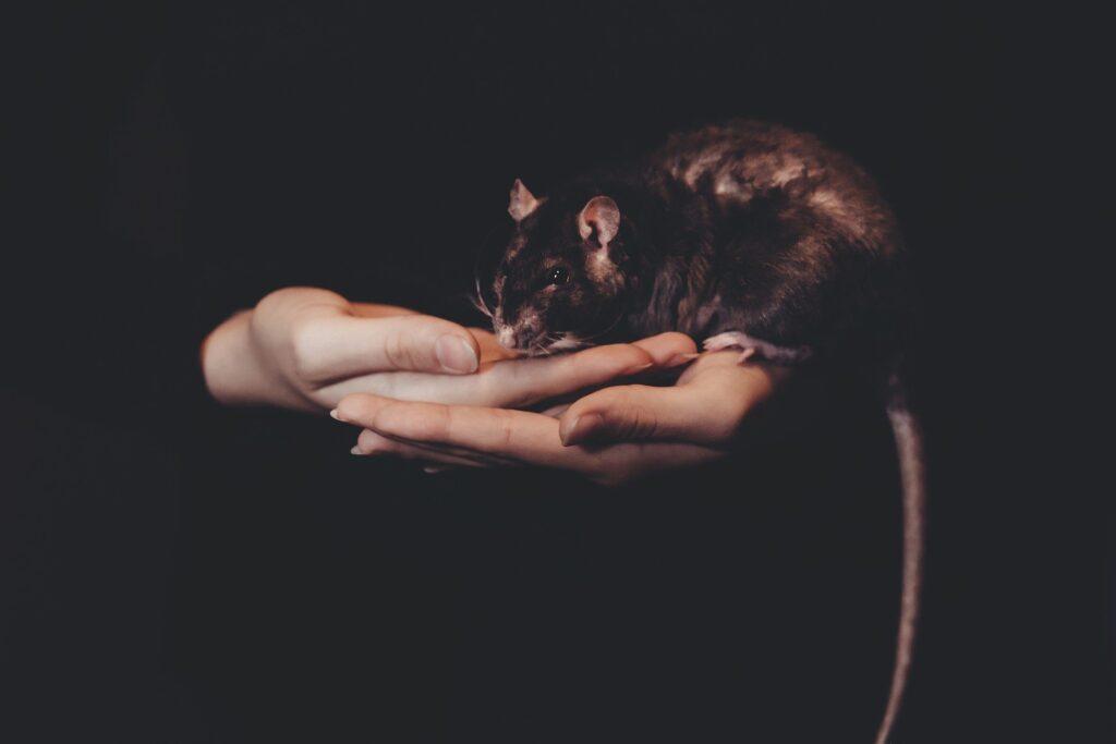 Pet care taker