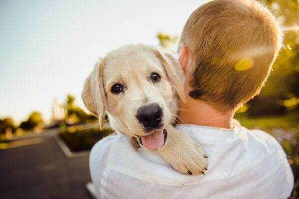 Short Story about a Dog with Moral Lesson